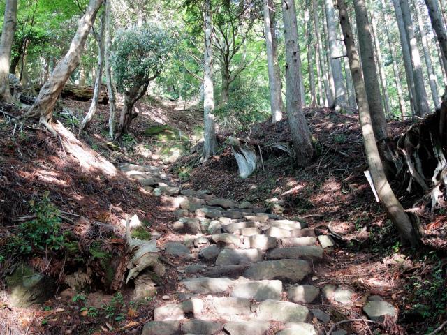 大山(表参道~見晴台周回)登山口コースガイド 石段【登山口ナビ】