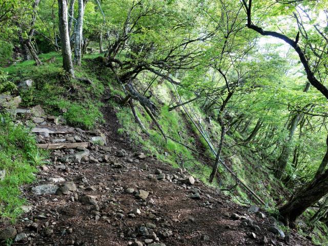 大山(表参道~見晴台周回)登山口コースガイド 二十一丁目 モノレール【登山口ナビ】