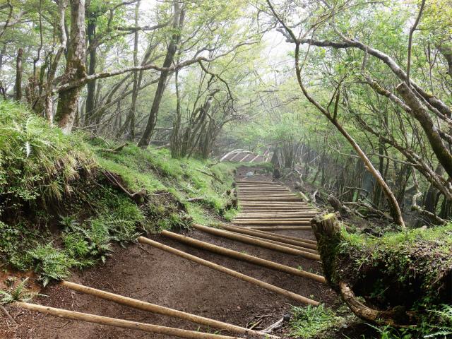 大山(表参道~見晴台周回)登山口コースガイド 階段【登山口ナビ】