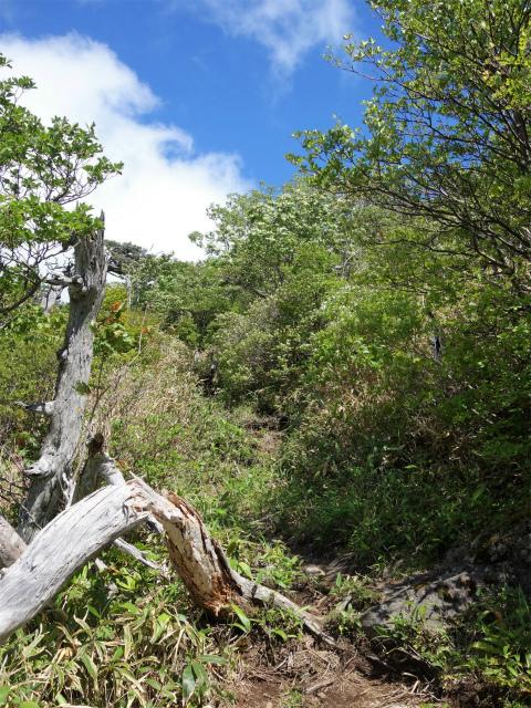 南月山(沼原~白笹山)登山口コースガイド 白笹山山頂直下の急登【登山口ナビ】
