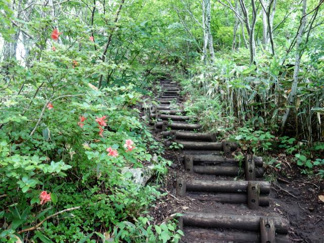 平標山/仙ノ倉山(松手山コース)登山口コースガイド 階段とヤマツツジ【登山口ナビ】