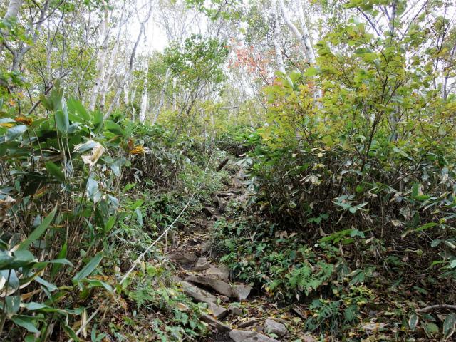 平標山/仙ノ倉山(松手山コース)登山口コースガイド ロープの急登【登山口ナビ】