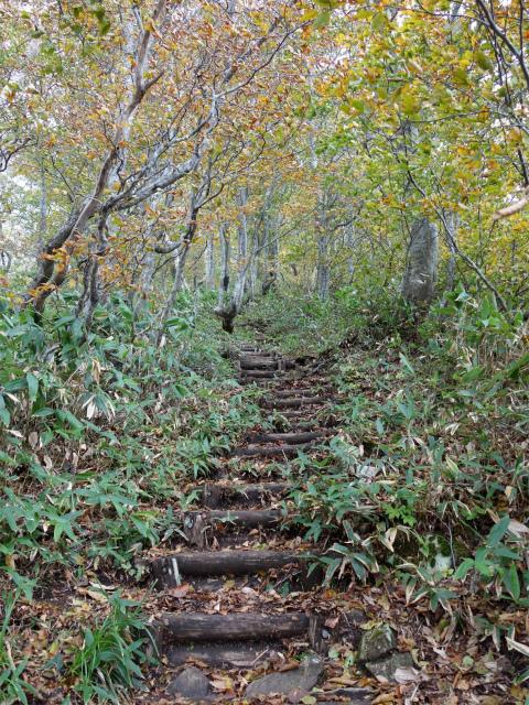 平標山/仙ノ倉山(松手山コース)登山口コースガイド 階段【登山口ナビ】