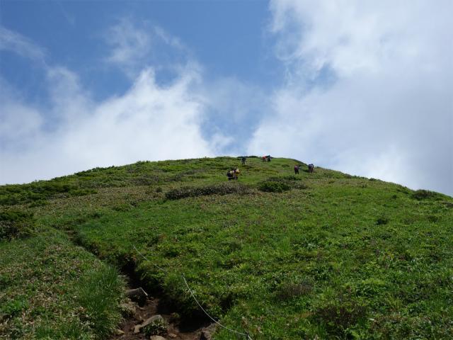 平標山/仙ノ倉山(松手山コース)登山口コースガイド 高山植物の草原【登山口ナビ】