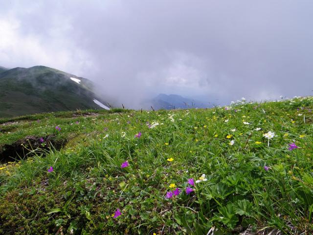 平標山/仙ノ倉山(松手山コース)登山口コースガイド 平標山東面の花畑【登山口ナビ】