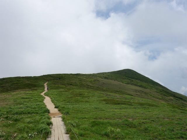 平標山/仙ノ倉山(松手山コース)登山口コースガイド 木道【登山口ナビ】