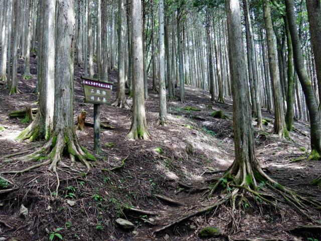 雲取山(霧藻ヶ峰・三峰ルート)登山口コースガイド 二股桧【登山口ナビ】