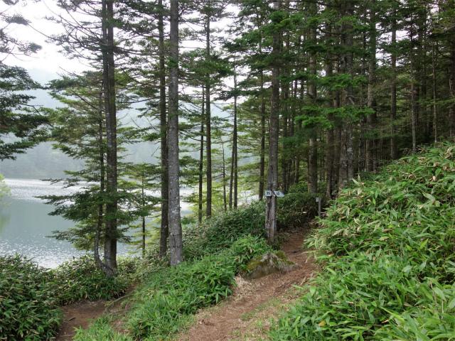 北横岳(大河原峠~双子池)登山口コースガイド 雌池畔【登山口ナビ】