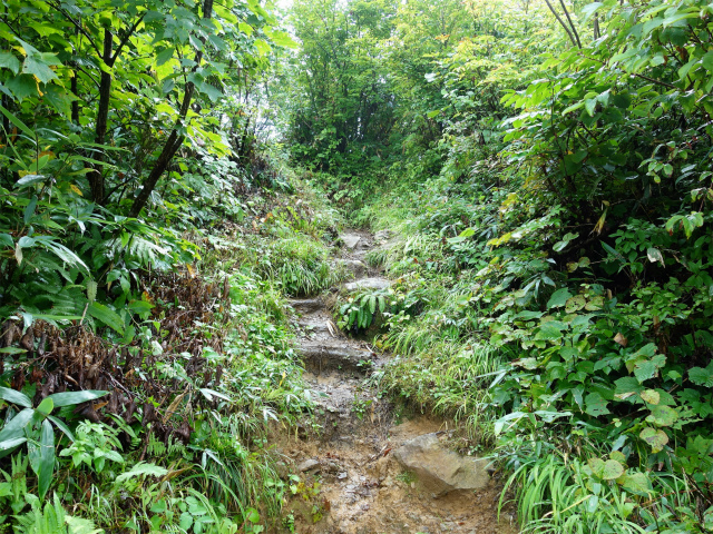 八海山(薬師岳~八ツ峰~入道岳)【登山口コースガイド】