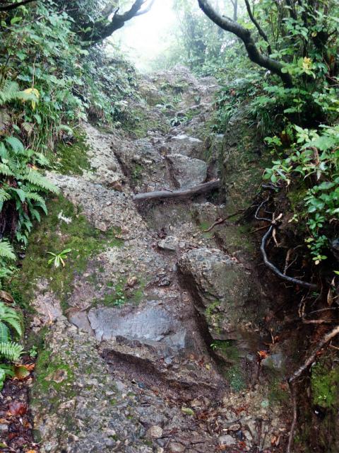 八海山(薬師岳~八ツ峰~入道岳)六合目手前の急登【登山口コースガイド】
