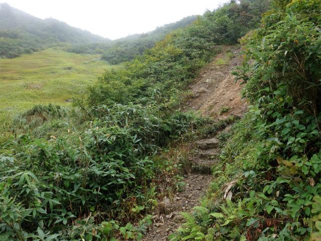 八海山(薬師岳~八ツ峰~入道岳)祓川の草原脇【登山口コースガイド】