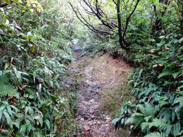 八海山(薬師岳~八ツ峰~入道岳)急登【登山口コースガイド】