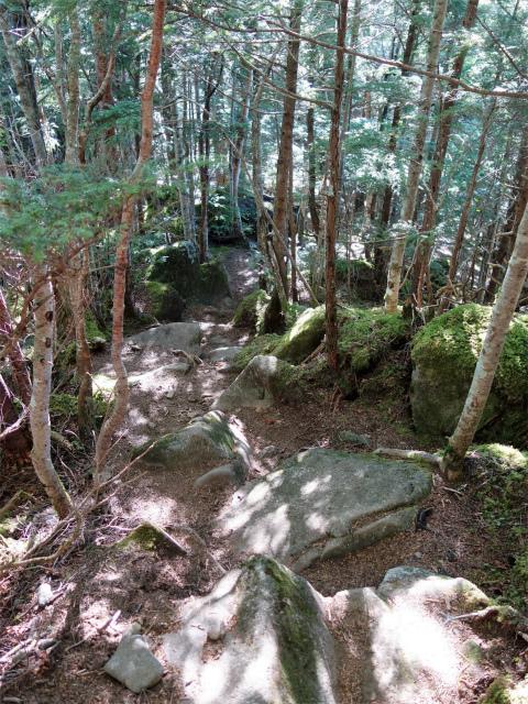 八ヶ岳・阿弥陀岳(御小屋尾根)登山口コースガイド シャクナゲのトンネル【登山口ナビ】