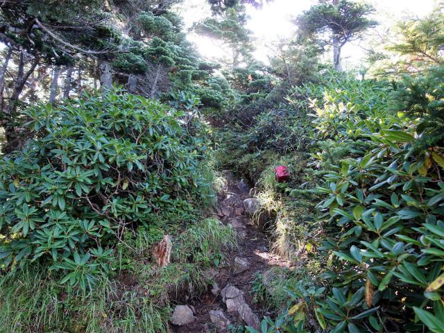 八ヶ岳・阿弥陀岳(御小屋尾根)登山口コースガイド 崩落地手前【登山口ナビ】