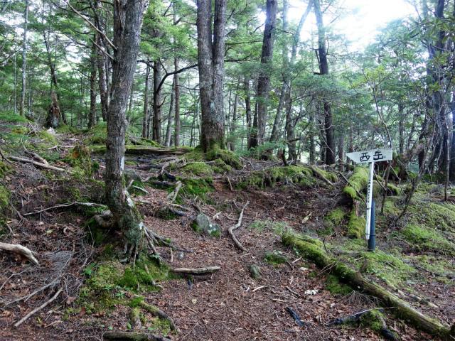 八ヶ岳・権現岳(西岳~源治新道)登山口コースガイド 古い指導標【登山口ナビ】