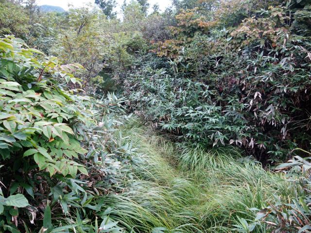 八海山(阿寺山~五竜岳~入道岳)登山口コースガイド 湿地帯【登山口ナビ】
