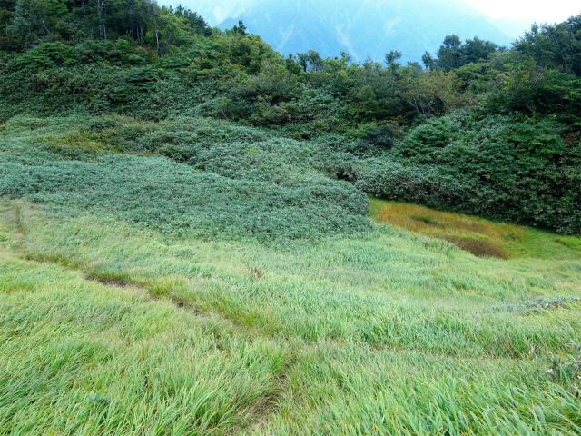 八海山(阿寺山~五竜岳~入道岳)登山口コースガイド 池塘【登山口ナビ】