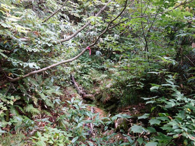 八海山(阿寺山~五竜岳~入道岳)登山口コースガイド【登山口ナビ】