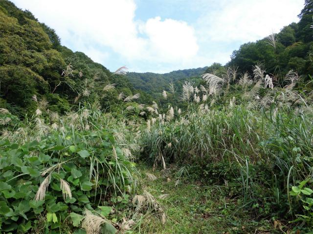 八海山(阿寺山~五竜岳~入道岳)登山口コースガイド 高巻き道【登山口ナビ】