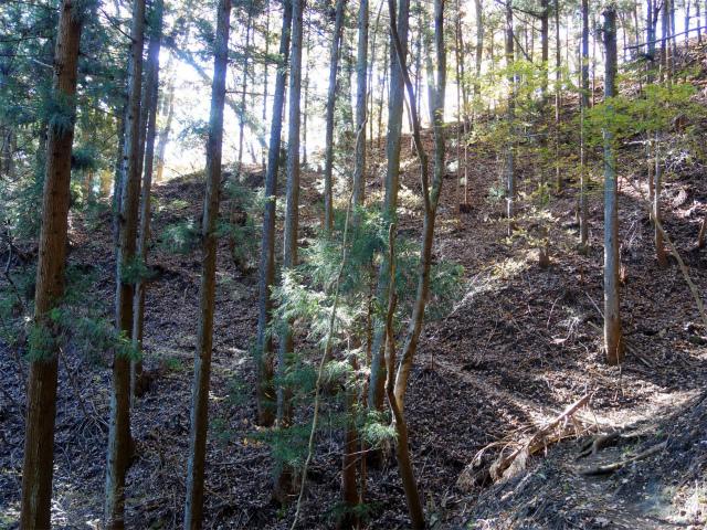 谷急山(旧国民宿舎~三方境)登山口コースガイド 小尾根【登山口ナビ】