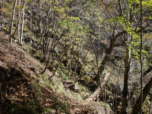 雁ヶ腹摺山(大峠~シオジの森周回)登山口コースガイド 木橋【登山口ナビ】