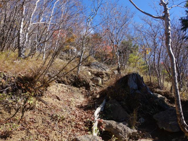 雁ヶ腹摺山(大峠~シオジの森周回)登山口コースガイド 露岩【登山口ナビ】