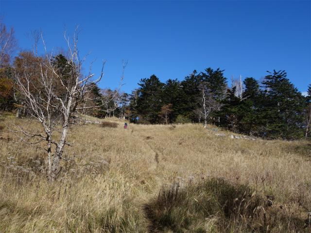 雁ヶ腹摺山(大峠~シオジの森周回)登山口コースガイド 山頂直下【登山口ナビ】