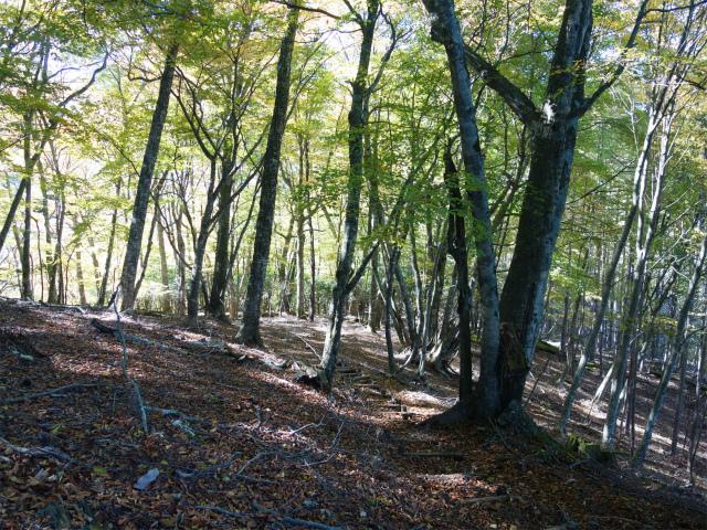 雁ヶ腹摺山(大峠~シオジの森周回)登山口コースガイド 階段【登山口ナビ】