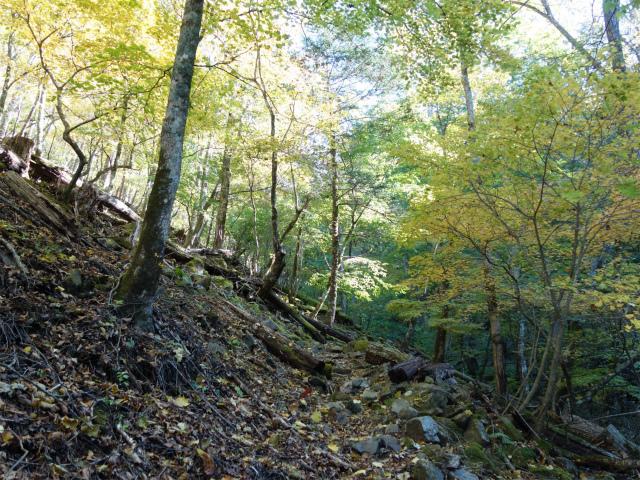 雁ヶ腹摺山(大峠~シオジの森周回)登山口コースガイド【登山口ナビ】