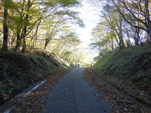 雁ヶ腹摺山(大峠~シオジの森周回)登山口コースガイド 大峠林道ゲート【登山口ナビ】