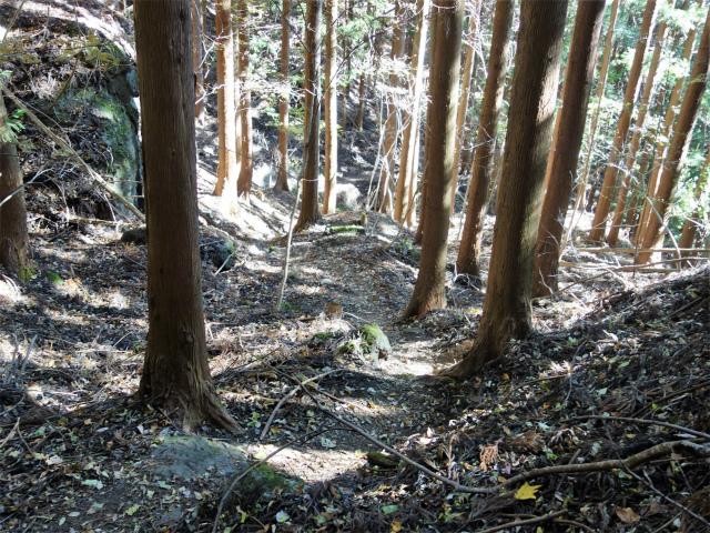 裏妙義・丁須の頭(籠沢コース~三方境周回)登山口コースガイド 杉林の巡視道【登山口ナビ】