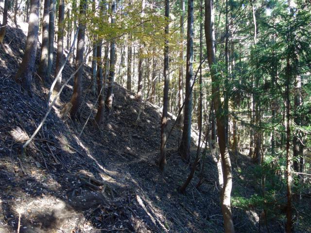 裏妙義・丁須の頭(籠沢コース~三方境周回)登山口コースガイド 植林帯【登山口ナビ】