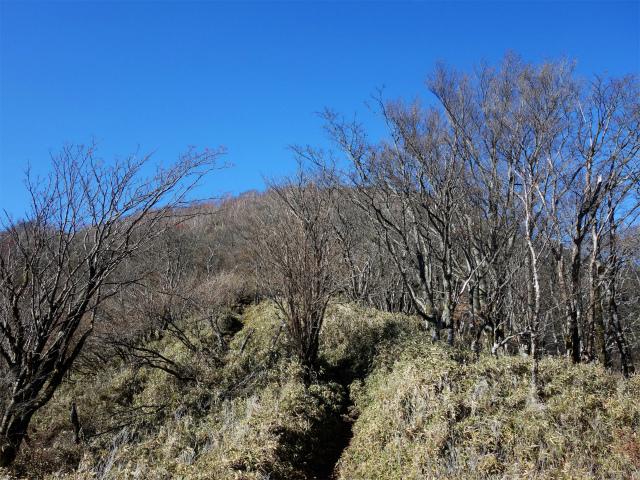 雨ヶ岳・タカデッキ(本栖湖~端足峠)登山口コースガイド 山頂手前【登山口ナビ】