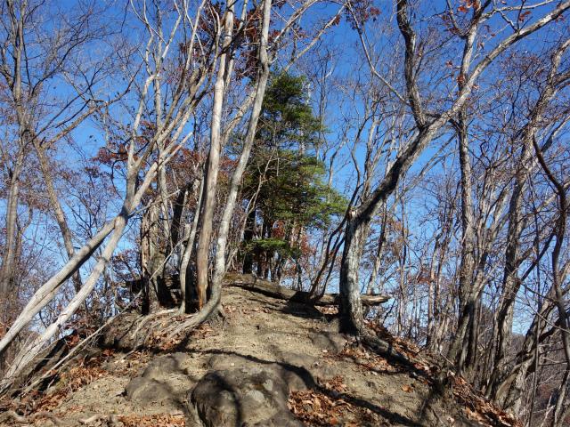 谷急山(旧国民宿舎~三方境)登山口コースガイド P1峰ピーク【登山口ナビ】