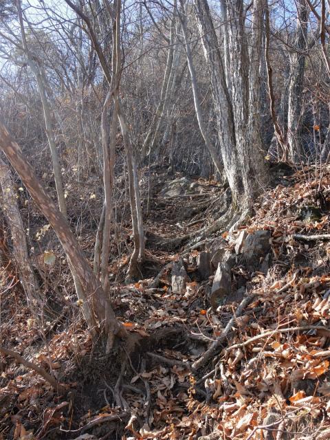 谷急山(旧国民宿舎~三方境)登山口コースガイド ロープ【登山口ナビ】