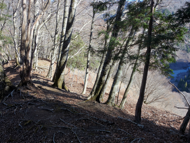 塔ノ岳(尊仏ノ土平~西尾根)登山口コースガイド 崩落斜面上部【登山口ナビ】