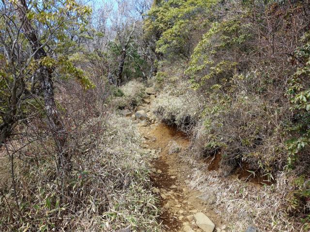 塔ノ岳(二俣~小丸尾根)登山口コースガイド ジグザグの登山道【登山口ナビ】