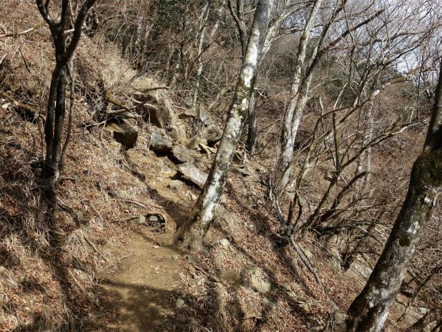 塔ノ岳(二俣~小丸尾根)登山口コースガイド 谷筋の急登【登山口ナビ】