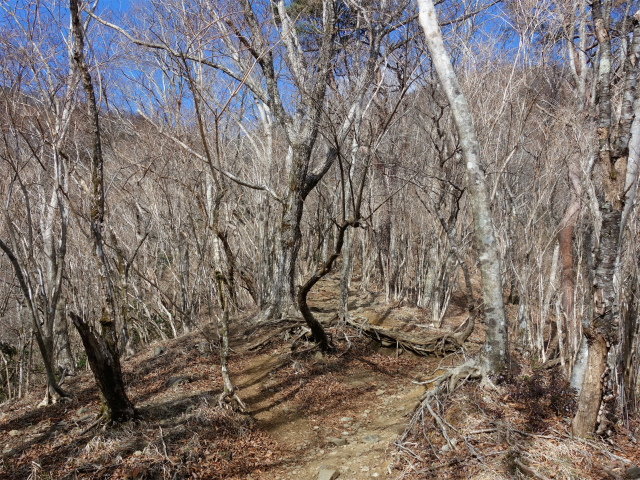 塔ノ岳(二俣~小丸尾根)登山口コースガイド 原生林【登山口ナビ】
