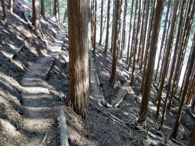 塔ノ岳(二俣~小丸尾根)登山口コースガイド 九十九折れの登山道【登山口ナビ】