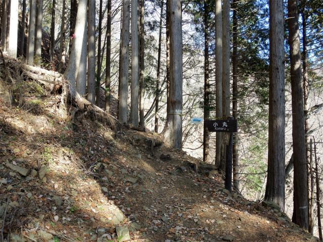 塔ノ岳(二俣~小丸尾根)登山口コースガイド 作業道終点【登山口ナビ】