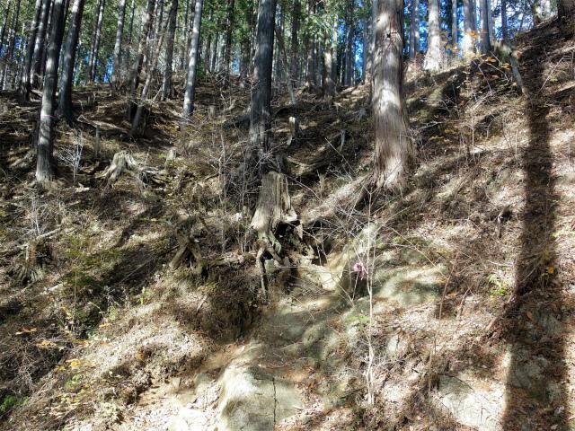 塔ノ岳(二俣~小丸尾根)登山口コースガイド 植林帯【登山口ナビ】