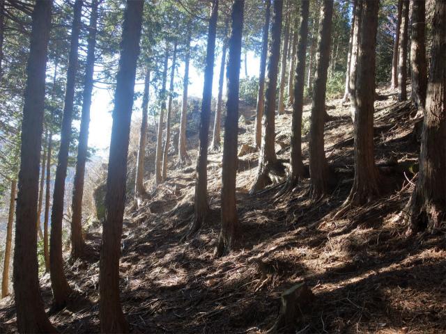 大室山(折花橋~鐘撞山)登山口コースガイド 黒岩展望台入口【登山口ナビ】
