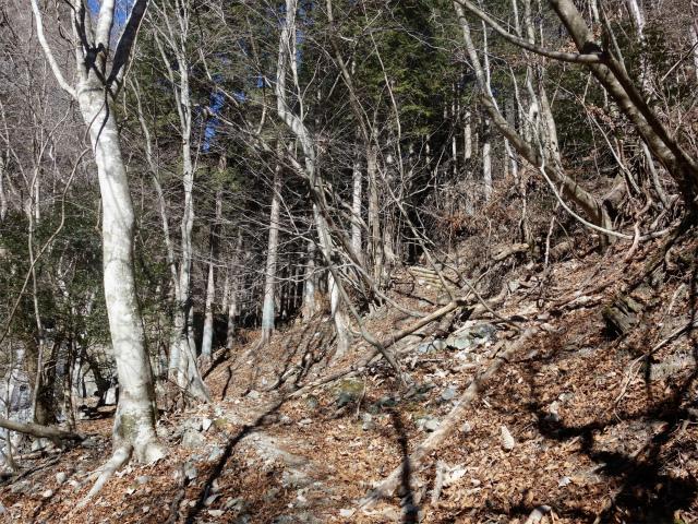 大室山(白石峠~加入道山)登山口コースガイド 樹林帯【登山口ナビ】