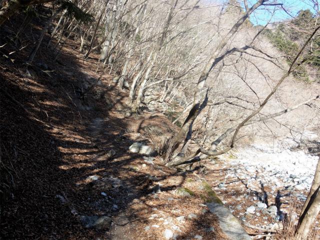 大室山(用木沢出合~犬越路コース) 登山口コースガイド 右岸の道【登山口ナビ】