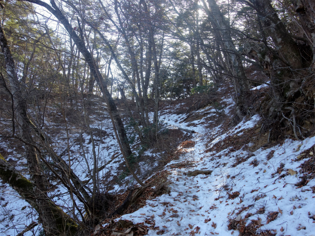 三頭山(大滝~石山~深山の路)【登山口ナビ】