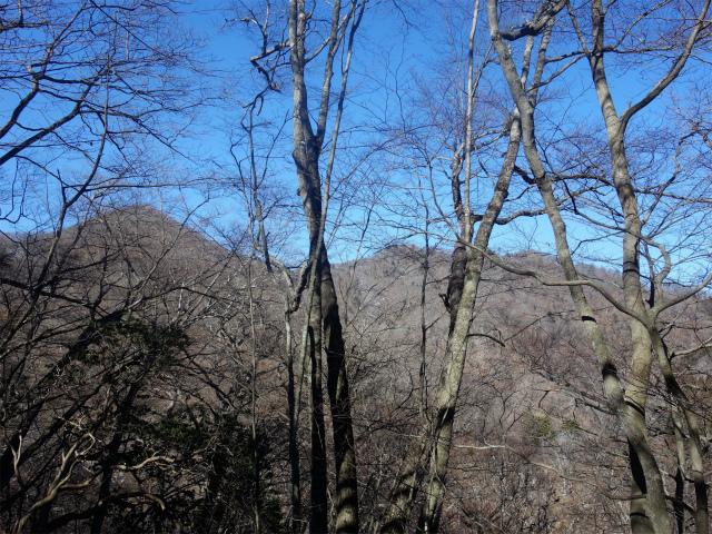 三頭山(大滝~石山~深山の路)大沢山【登山口ナビ】