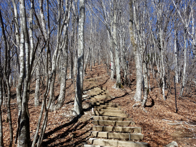 三頭山(大滝~石山~深山の路)階段【登山口ナビ】
