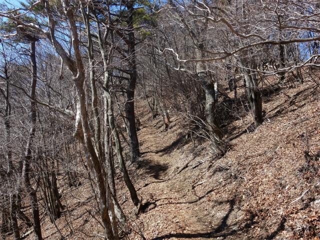 笹子雁ヶ腹摺山(吉田口~笹子峠周回)登山口コースガイド 新道トラバース路【登山口ナビ】