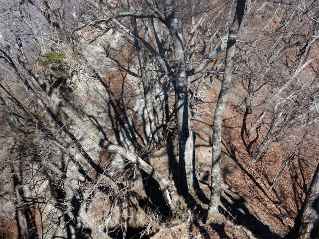 笹子雁ヶ腹摺山(笹子峠)登山口コースガイド 崩落斜面【登山口ナビ】